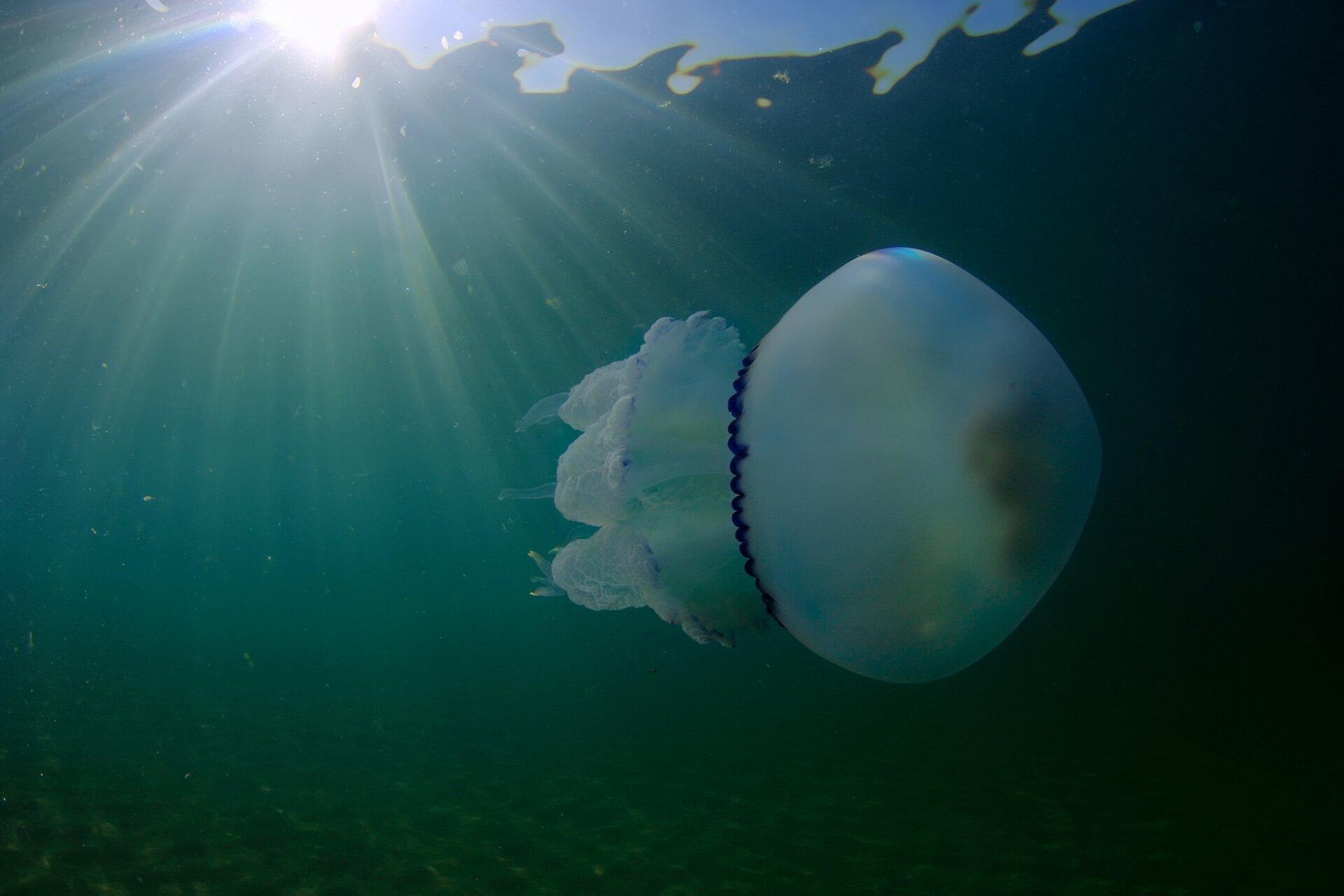 Новая экологическая катастрофа: море в Крыму стало серым