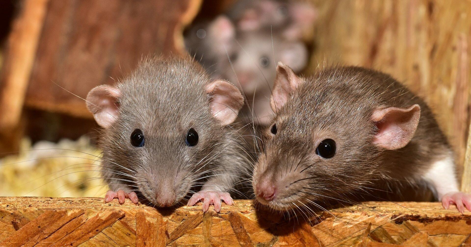 Старение мозга удалось замедлить: новости от калининградских ученых